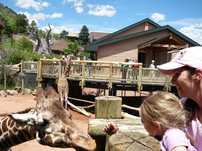 tasha feeding giraffe